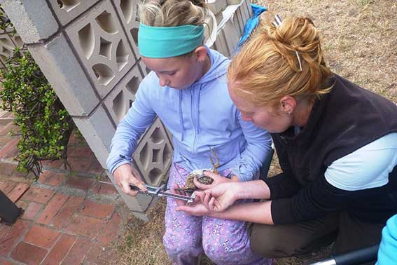 Project lead Dr Birgita Hansen helping Young Ranger Kelly Bateup to measure a snipe. Photo Lori Gould.