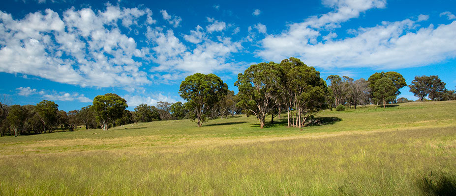 Growing Southern Gippsland