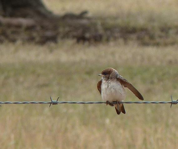 Birdlife in agricultural landscapes journal publication