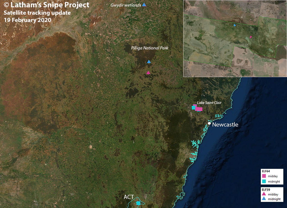 Map of satellite transmitter data from tagged snipe 64 and 59. The inset top right shows a close of up Gwydir wetlands.