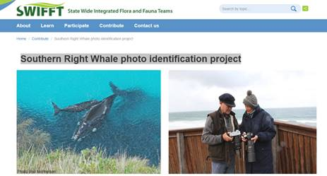 Whale sightings and photo identification