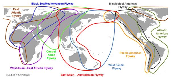 Figure showing the nine global flyways