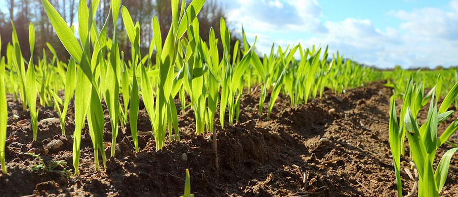 Soil CRC